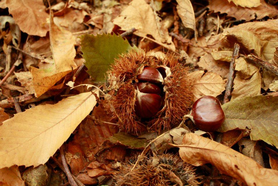 Week End Funghi e Castagne nel Parco Nazionale del Pollino
